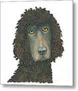 Irish Water Spaniel Metal Print