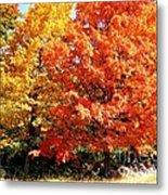 Is Autumn Already Metal Print