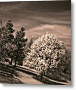 ...is But A Dream Metal Print