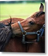 Is It My Tail Metal Print
