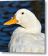 Is There A Feather On My Nose Metal Print