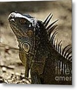 Island Lizards Three Metal Print