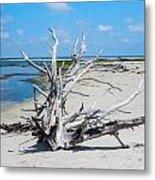 Island Tree Metal Print