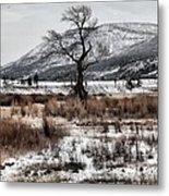 Isolation In Yellowstone Metal Print
