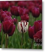 It Is Beautiful Being Different Metal Print by Bob Christopher