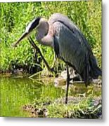 Itch To Scratch Metal Print