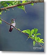 It's A Big World Out There... Metal Print