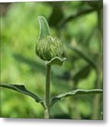 Its A Green World Metal Print