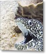 It's A Moray Metal Print