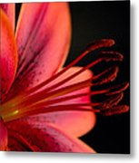 It's All In The Details Metal Print