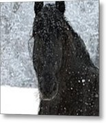 It's Friesian Out Here Metal Print