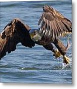 It's Just A Fish  Metal Print by Glenn Lawrence