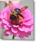 It's Mine Said The Bee Metal Print