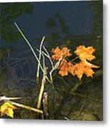It's Over - Leafs On Pond Metal Print