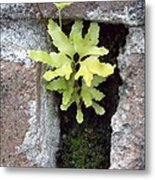 Its The Little Things In Life Metal Print