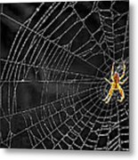 Itsy Bitsy Spider My Ass 3 Metal Print
