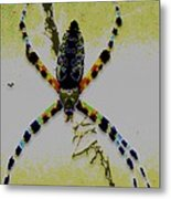 Itsy Bitsy Spider Metal Print by Rebecca Flaig