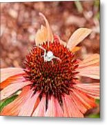 Itsy Bitsy Spider Walking On The Flower Metal Print