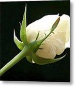 Ivory Rose Bud Metal Print
