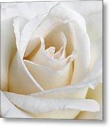 Ivory Rose Flower Metal Print