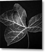 Black And White Flowers Macro Photography Art Work Metal Print