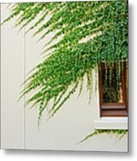 Ivy - Window Covered By Creeping Ivy. Metal Print