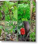 Jack-in-the-pulpit Wildflower    Arisaema Triphyllum Metal Print