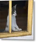 Jackson The Inquisitive Kitty Metal Print