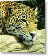Jaguar Portrait Metal Print