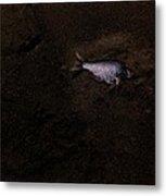 Jalama Fish Metal Print