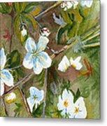 Jane's Apple Blossoms 1 Metal Print