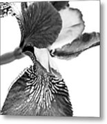 Japanese Iris Flower Monochrome Metal Print