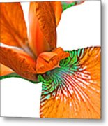 Japanese Iris Orange White Five Metal Print