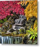 Japanese Laced Leaf Maple Trees In The Fall Metal Print