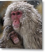 Japanese Macaque And Baby In Snow Japan Metal Print
