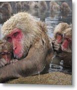 Japanese Macaque Grooming Mother Metal Print
