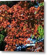 Japanese Maple Canopy Metal Print