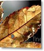 Japanese Maple Leaf Brown - 4 Metal Print