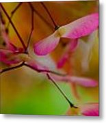 Japanese Maple Seedling Metal Print