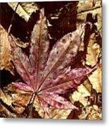 Japanese Maple Tree Leaves Metal Print