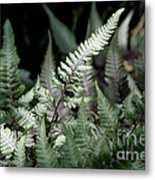 Japanese Painted Fern Metal Print