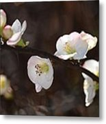 Japanese Quince 2 Metal Print