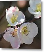 Japanese Quince 4 Metal Print