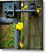 Jasmine Flowers On Gate Latch Metal Print