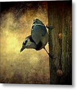 Jay On The Side Metal Print