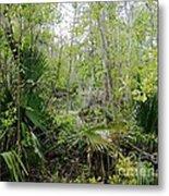 Jean Lafitte National Preserve Swamp Louisiana Metal Print