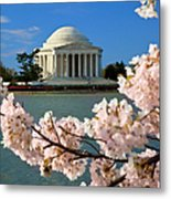 Jefferson Memorial Cherry Trees Metal Print