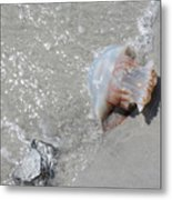 Jelly Ball And Oyster Shell Washed Upon Nc Beach Metal Print