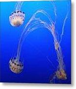 Jellyfish 1 Metal Print