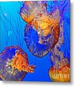Jellyfish IIi Metal Print